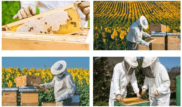 Los bajos precios y el cambio climático, principales amenazas de la apicultura