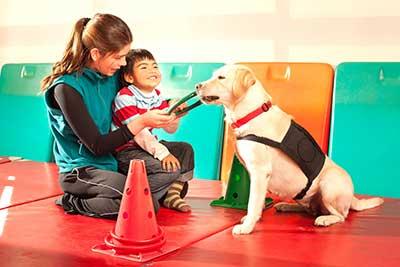 curso de adiestramiento canino en torrent gratis cursos online