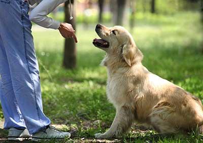 curso de adiestramiento de animales gratis cursos online
