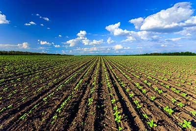 curso de agricultura gratis cursos online