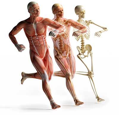 curso de anatomia patologica gratis cursos online