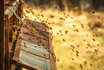 curso de apicultura gratis cursos online