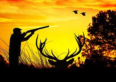 curso de caza gratis cursos online