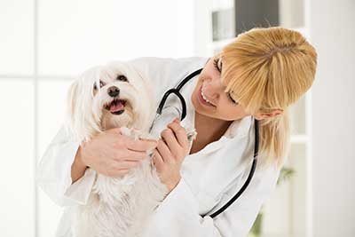 curso de ecografia veterinaria gratis cursos online