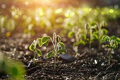 curso de ecologia gratis cursos online