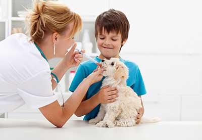 curso de farmacia veterinaria gratis cursos farmaceutica online