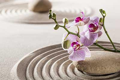 curso de feng shui gratis cursos online
