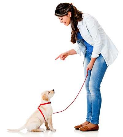 curso de obediencia canina gratis cursos online