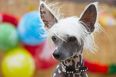 curso de peluqueria canina cordoba gratis cursos online