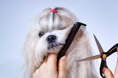 curso de peluqueria canina tarragona gratis cursos online
