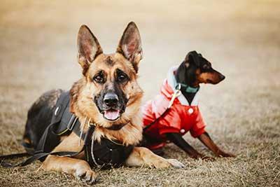curso de perros gratis cursos online