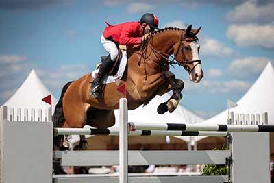 curso de tecnico deportivo equitacion gratis cursos online