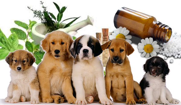 Curso Tecnico Homeopatia Veterinaria