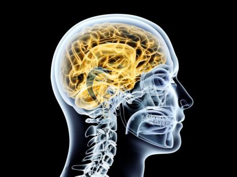 Curso Universitario Patologias Neurologicas