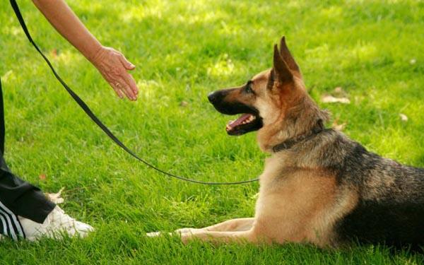 cursos perros