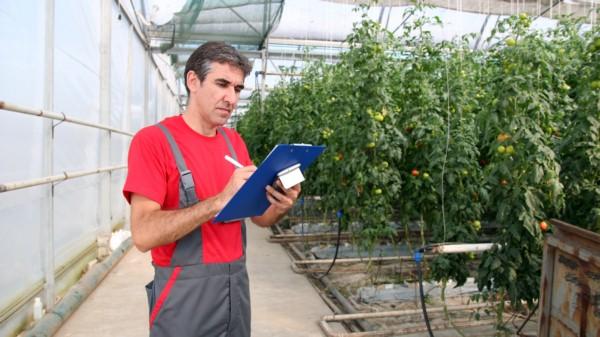 Gestion Produccion Agricola