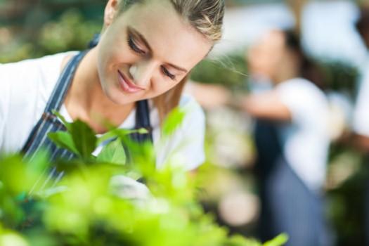 Jardineria Restauracion Paisaje