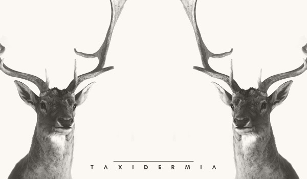 taxidermia animales