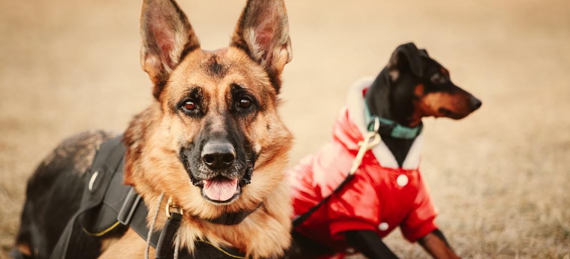 curso adiestrador perros