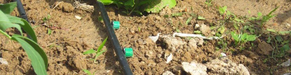 agao0108 curso actividades auxiliares en viveros jardines