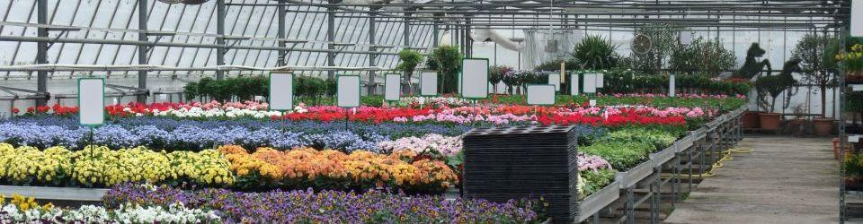 postgrado en agrojardineria y composiciones florales titulacion universitaria - Composiciones Florales