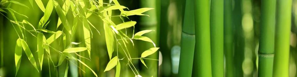 Curso online especialista gestion organizacion vivero forestal for Organizacion de viveros