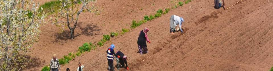 Cursos en Agricultura
