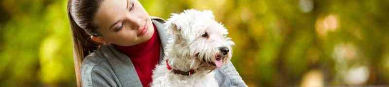 Curso online peluqueria canina material peluqueria canina curso