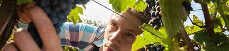 Cursos en Fruticultura