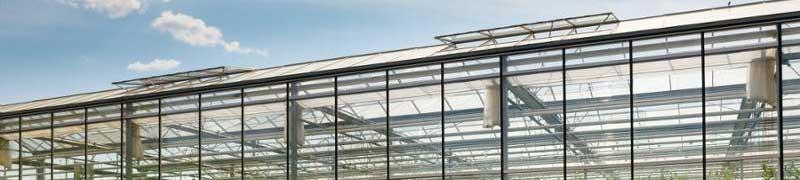 Agau0110 produccion de semillas y plantas en vivero online for Produccion de plantas en vivero pdf
