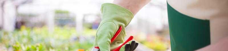 Agau0110 produccion de semillas y plantas en vivero a for Produccion de plantas en vivero pdf