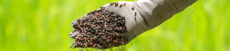 Mf1479 2 propagacion de plantas en vivero online for Vivero plantas online