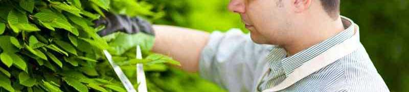 El jardin online for Trabajo jardinero