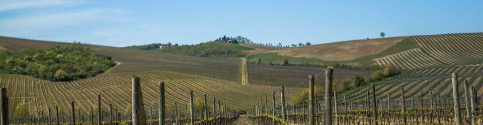 Cursos en Agraria