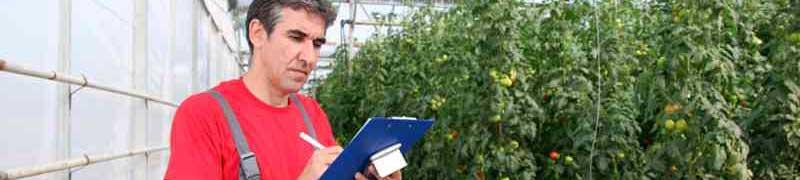 Curso online uf1597 manejo de instalaciones y expedicion for Vivero plantas online