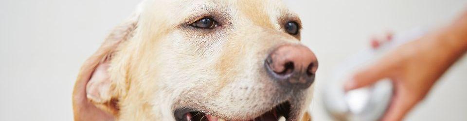 Cursos en Adiestramiento y Educación Canina