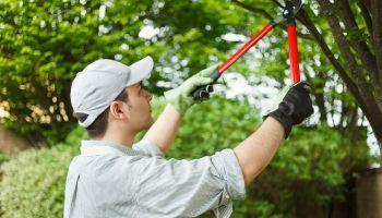 Perito agricola