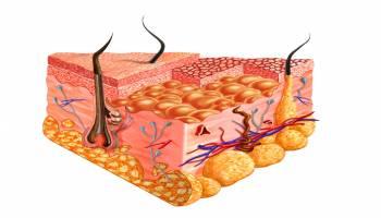 curso temario anatomia patologica y citologia