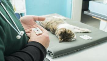 curso auxiliar veterinaria a distancia