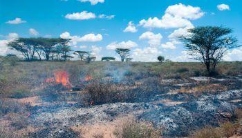cursos online incendios forestales