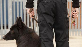 Curso Gratuito Máster en Gestión de la Seguridad Aeroportuaria