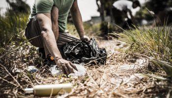 Curso gratuito Gestión de la Repoblación Forestal y Corrección Hidrológico-Forestal (Online)