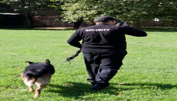curso de escuelas especializacion vigilante seguridad privada gratis cursos online