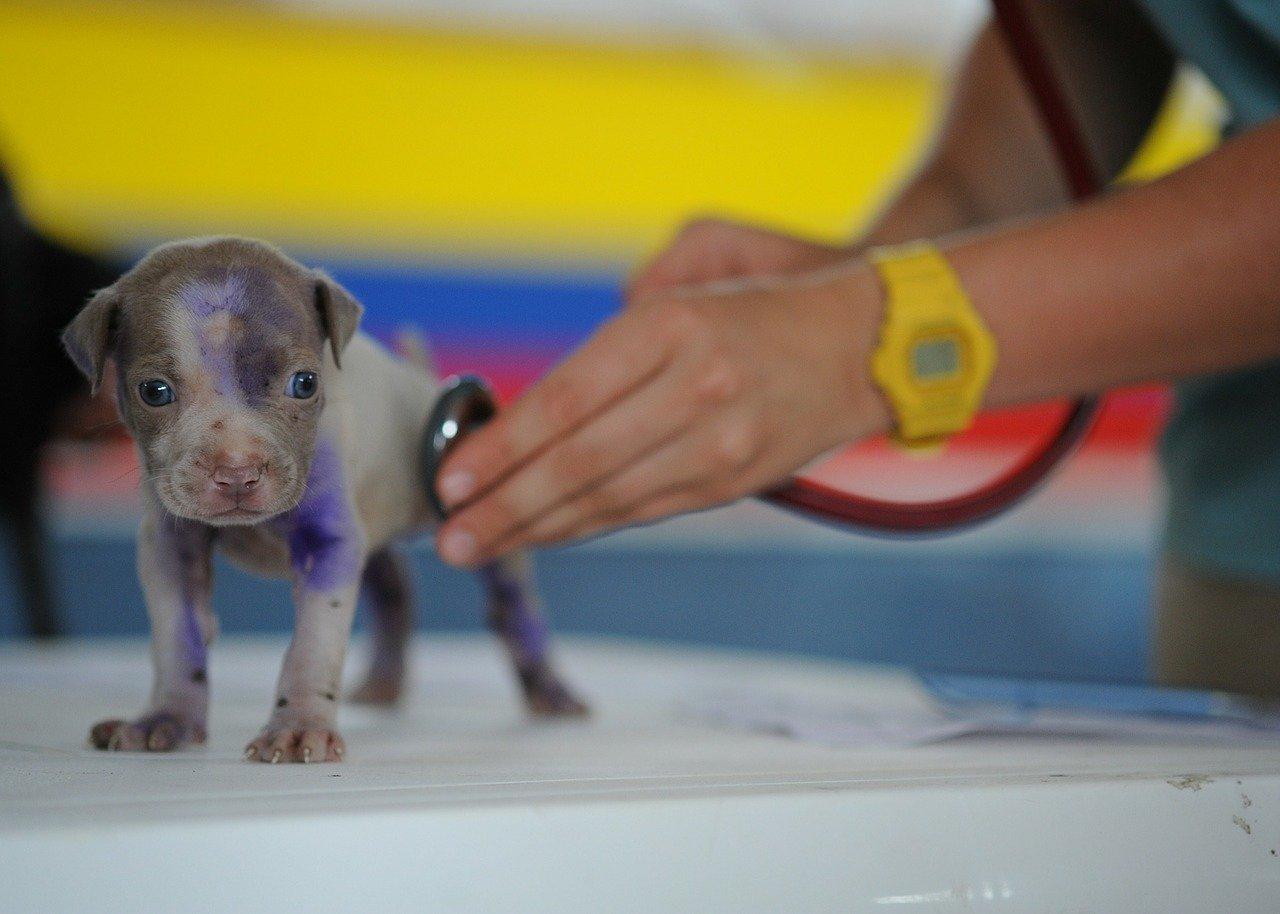 qué se necesita para hacer un curso de auxiliar de veterinaria