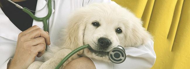 curso acupuntura veterinaria