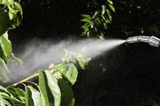 Curso gestión de servicios para el control de organismos nocivos