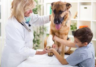 curso de anestesia veterinaria