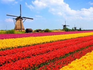 aprender holandes online