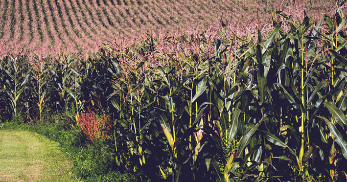 curso fitosanitarios gratis
