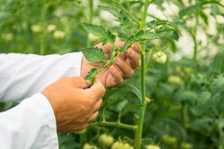 Curso agricultura ecológica online